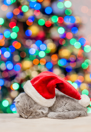 Baby kitten in red santa hat sleep on pillow with Christmas tree on background. Empty space for text.