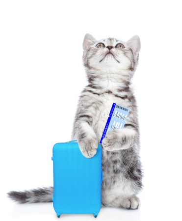 Kitten holds suitcase, airline tickets and looking up. isolated on white background. Stock Photo