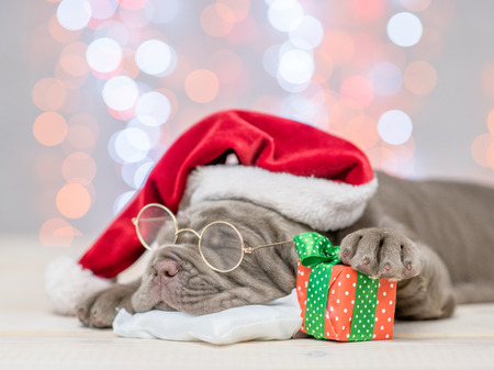Mastiff puppy with red santa hat and gift box sleep on festive background. Фото со стока