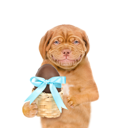 Smiling puppy holding Easter basket with chocolate egg.