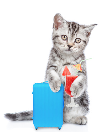 Kitten holds suitcase and cocktail and looking at camera. isolated on white background.