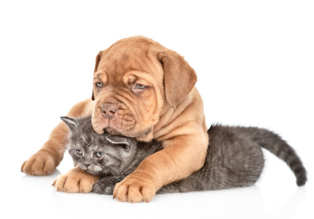Playful puppy embracing kitten and looking away. isolated on white background. Stock Photo