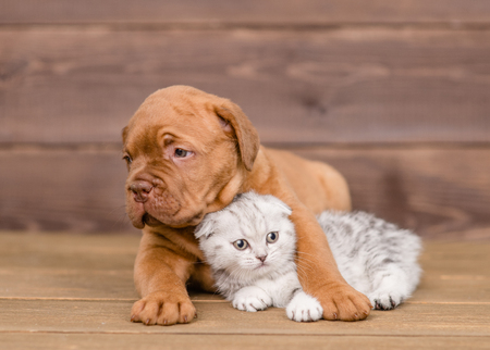 Puppy embracing kitten on wooden background.