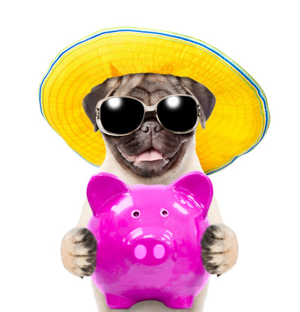 Funny puppy in summer hat and  sunglasses is holding a piggy bank. isolated on white background.