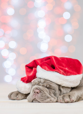 Mastiff puppy in red santa hat sleeping with Christmas tree on background.
