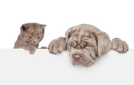Cat and dog over white banner looking down. isolated on white background. Standard-Bild