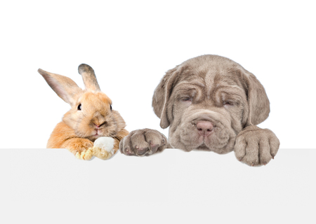 Dog and rabbit above empty white banner. isolated on white background. Empty space for text.