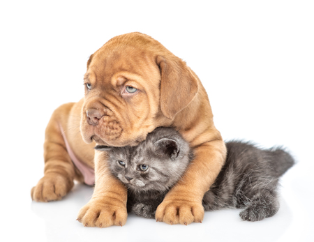 Friendly puppy embracing kitten. isolated on white background.