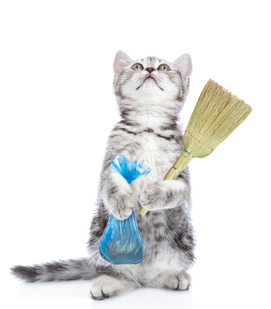Kitten holds plastic bag and broom looking up. Concept cleaning up dog droppings. isolated on white background. Stock Photo