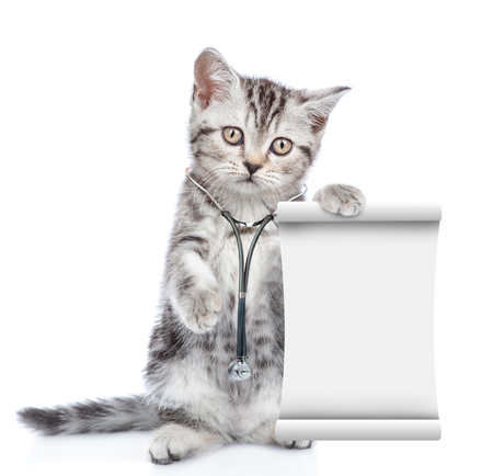 Kitten with stethoscope on his neck holds empty list. isolated on white background.