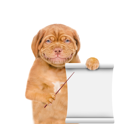 Smiling puppy pointing on empty list. isolated on white background.