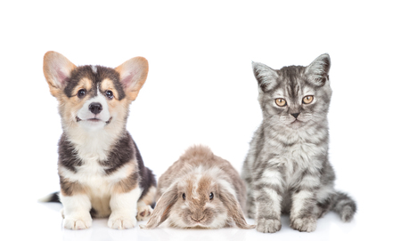 Cat, dog and rabbit together in front view. Isolated on white background.