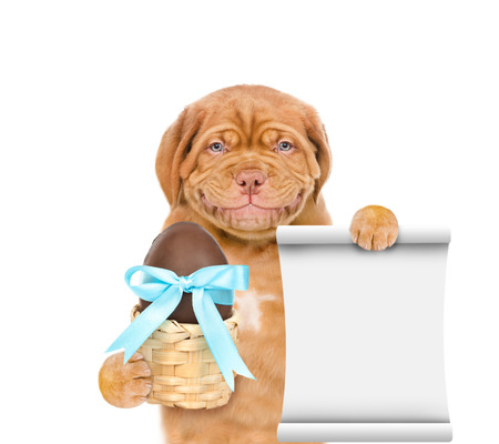 Smiling puppy holding Easter basket with chocolate egg and empty list. isolated on white background.
