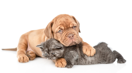 Playful puppy embracing kitten and looking at camera. isolated on white background. 写真素材