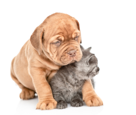 Friendly puppy embracing kitten. looking away on empty space. Isolated on white background. 写真素材