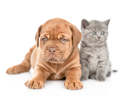 Puppy lying with funny kitten in front view looking at camera. isolated on white background.