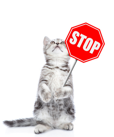 Cat holding stop sign and looking up. Isolated on white background. Stock Photo