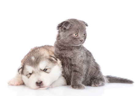Baby kitten sitting with sad sleeping puppy.  isolated on white background.