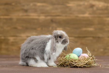 Easter rabbit with a nest full of colorful eggs on wooden background.