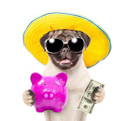 Chiot drôle en chapeau d'été et lunettes de soleil tient une tirelire et des dollars usa. isolé sur fond blanc.
