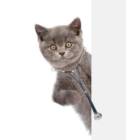 Gato con un estetoscopio en el cuello se asoma detrás de una pancarta blanca. aislado sobre fondo blanco.