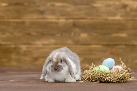 Easter rabbit with a nest full of colorful eggs on wooden background. Empty space for text.