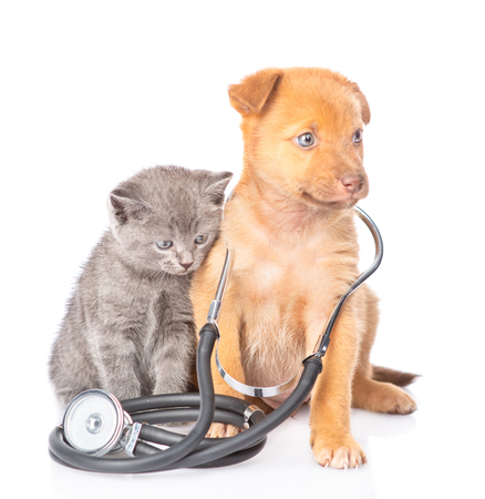 kitten with mixed breed puppy with stethoscope on his neck. isolated on white background.