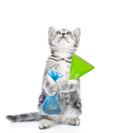 Cat holds plastic bag and scoop and looking up. Concept cleaning up dog droppings. isolated on white background. Banque d'images