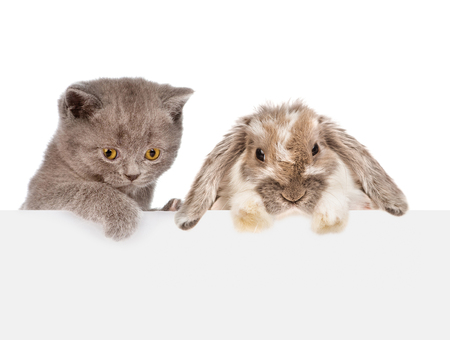 Rabbit and kitten over white banner looking down together. isolated on white background. 版權商用圖片