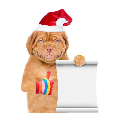 Smiling puppy in red christmas hat with empty list showing thumbs up. isolated on white background.