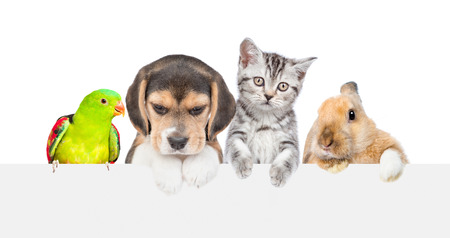 Group of pets  over empty white banner. isolated on white background. Empty space for text. 版權商用圖片