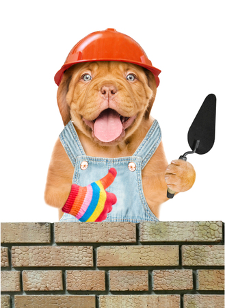 Funny puppy builder with a trowel constructing a brick wall and showing thumbs up. Isolated on white background.