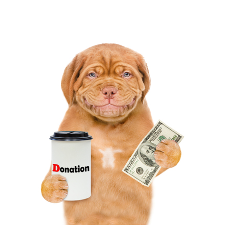 Smiling mastiff puppy with a donation can, asking money for  charity. isolated on white background. Stock Photo