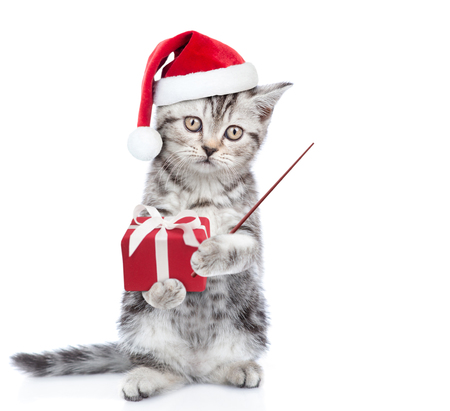 Tabby kitten in red christmas hat with gift box pointing on empty space. isolated on white background.
