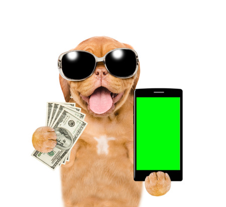 Funny puppy with sunglasses holding smartphone and dollars. Isolated on white background.