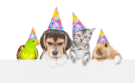 Large group of pets in birthday hats over empty white banner. isolated on white background. Empty space for text. 版權商用圖片