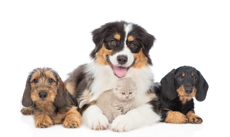 Group of puppies with kitten. Isolated on white background. Banque d'images - 123296405