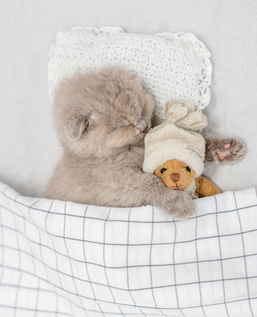 Cute baby kitten sleeping on pillow under blanket with toy bear.