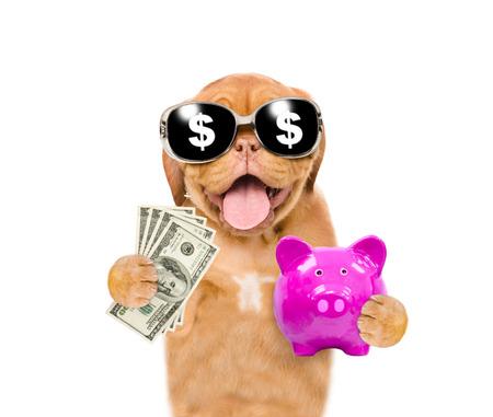 Lustiger Welpe in Sommerhut und Sonnenbrille hält ein Sparschwein und Dollar USA. isoliert auf weißem Hintergrund.
