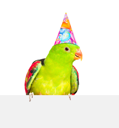 Red-Winged Parrot  in birthday hat above white banner. isolated on white background.