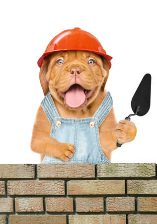 Funny puppy builder with a trowel constructing a brick wall. Isolated on white background.