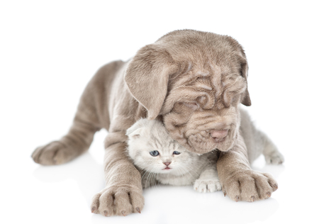 Brown mastiff puppy hugging tabby kitten. isolated on white background. Standard-Bild