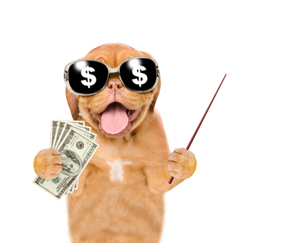 Very happy puppy with sunglasses holding dollars and pointing on empty space. isolated on white background.