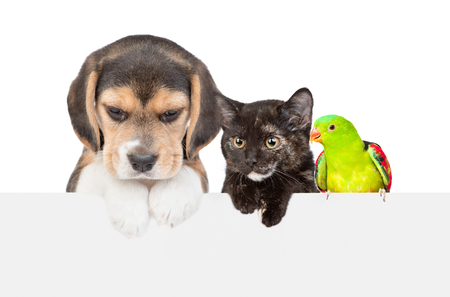 Group of pets  over empty white banner looking down. isolated on white background. Empty space for text.