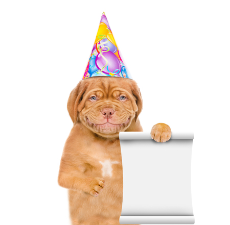 Smiling puppy in birthday hat holding empty list. isolated on white background.