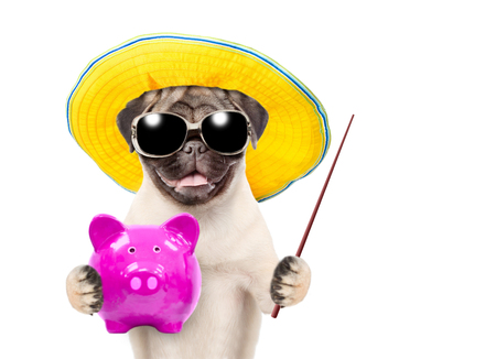 Funny puppy in summer hat and  sunglasses is holding a piggy bank and pointing on empty space. isolated on white background. Imagens