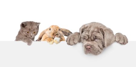 Cat,dog and rabbit over empty white banner. isolated on white background. Empty space for text. 版權商用圖片
