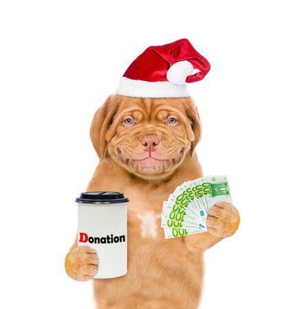 Smiling mastiff puppy in red christmas hat with euro donation can, asking money for  charity. isolated on white background.