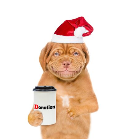 Smiling mastiff puppy in red christmas hat with a donation can, asking money for  charity. isolated on white background.