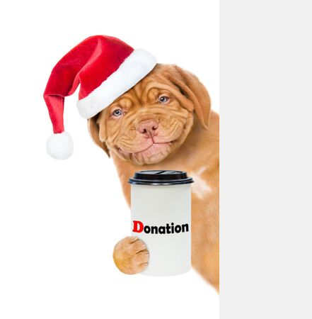 Smiling puppy in red christmas hat with a donation can, asking money behind white banner. isolated on white background.